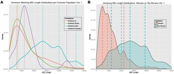 figure 27 (Povysil et al., 2014): IBD segments that match the Denisovan genome have a straightforward private European component (fig.27A, density peaks at 12,000 and 46,000 bp).
